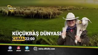 çiftçi tv küçükbaş dünyası